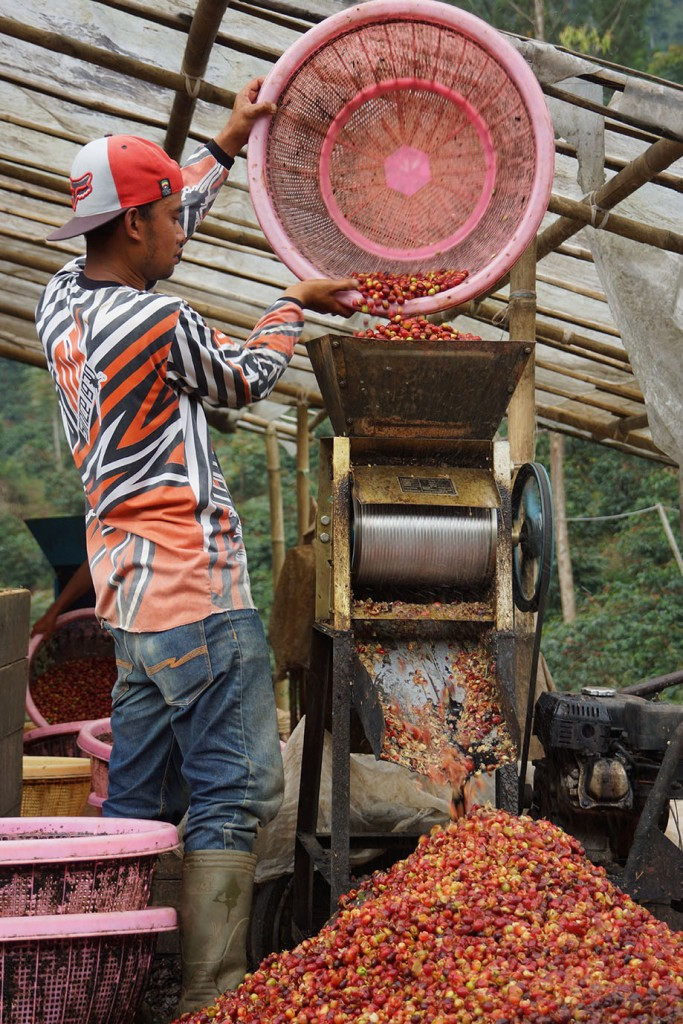 Pengupasan kulit buah atau pulping dengan menggunakan mesin