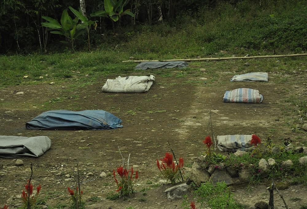 Teknik olah kering atau natural process adalah pilihan masyarakat untuk pengolahan kopi robusta. Pada sore hari mereka menutup dengan terpal agar tidak basah kembali terpapar embun malam dan gerimis.